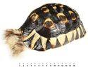 Tortoise-shell container