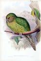 Kakapo in John Gould Birds of Australia,Supplement vol. (n1-a.8): plate 57